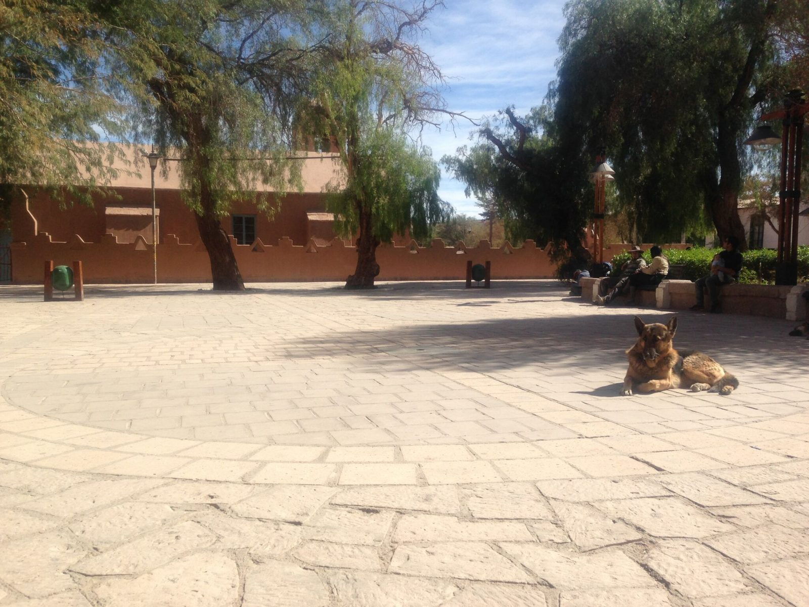 One of the many dogs chilling in the Plaza