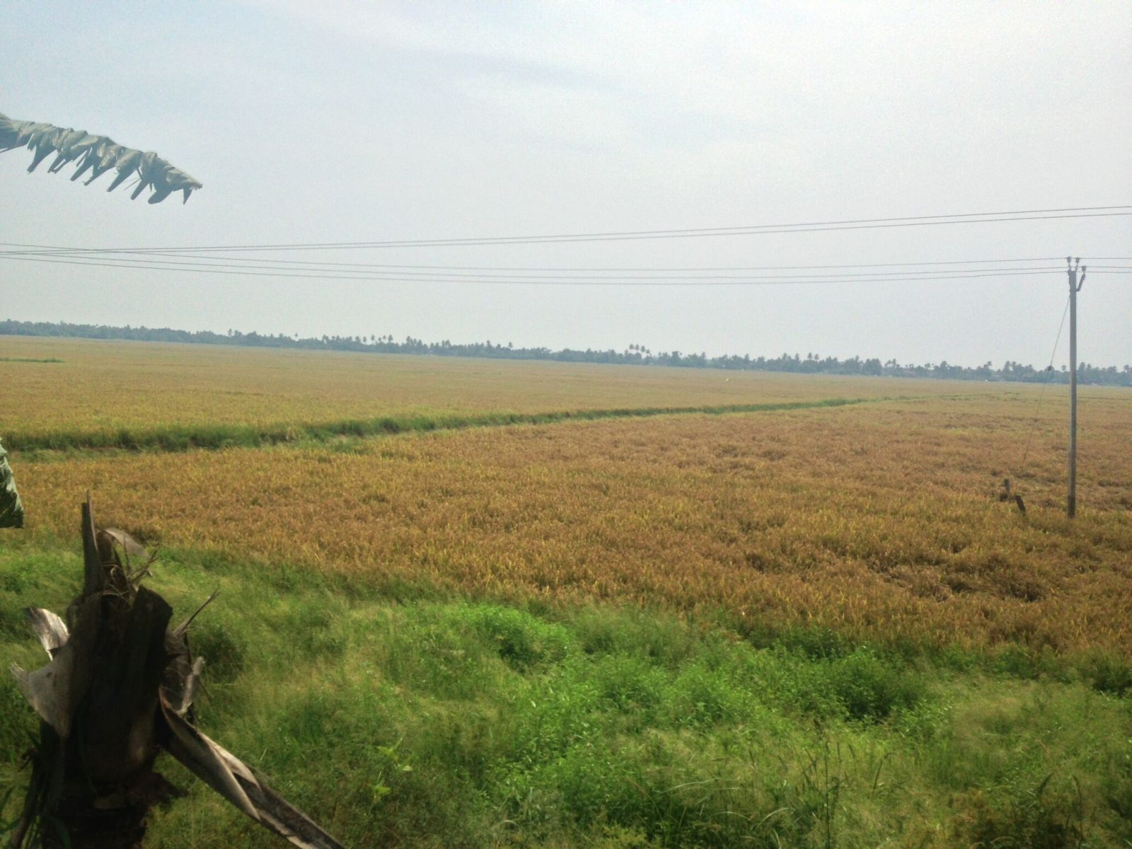 alleppey-countryside