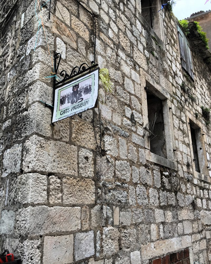 photo of cats museum in Kotor