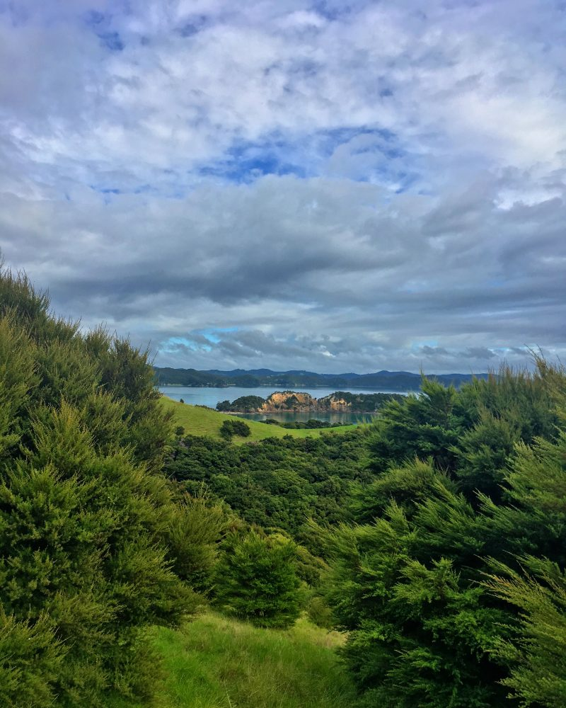 pretty view of the Bay of Islands from the top of a small hill