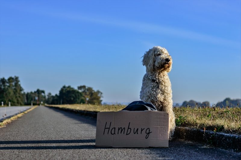 A dog hitchhiking to Hamburg