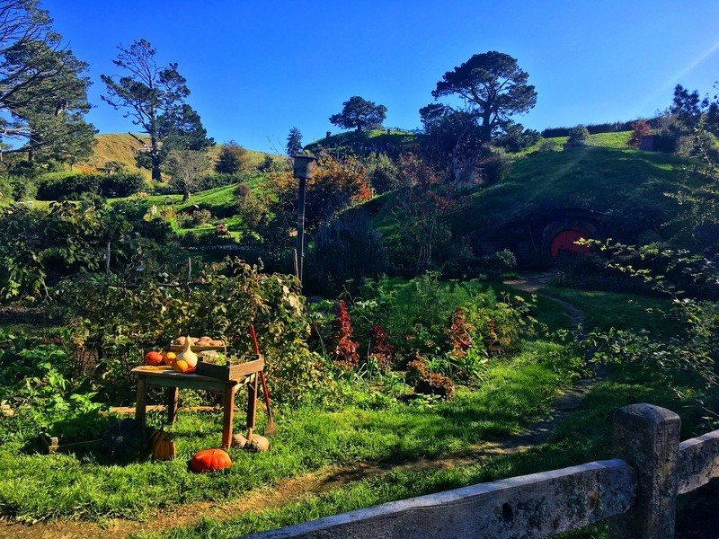 real pumpkins growing in the fully functional vegetable garden at Hobbiton
