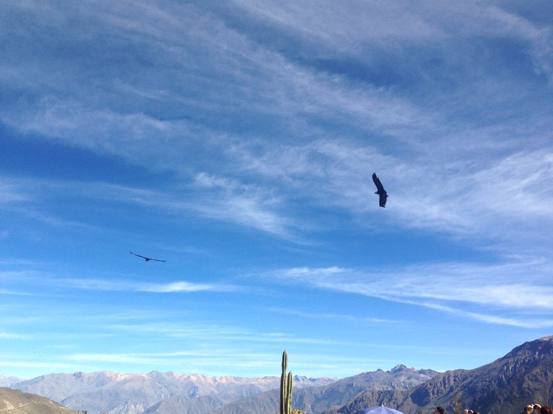 The Colca Canyon tour and trek both culminate at the Cruz del Condor, where you can see condors taking flight across the valley.